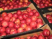 Польские яблоки от производителя