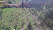 Сосны 2-х годичные 50-70 см,  500 ед.