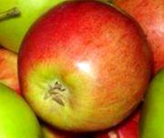 Саженцы яблонь оптом и в розницу .