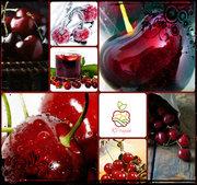 Саженцы вишни в Алматы.