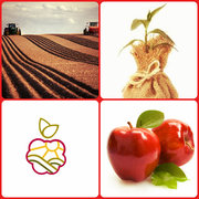 Питомник плодово-ягодных культур реализует саженцы.