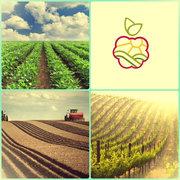 Саженцы плодово-ягодных культур,  винограда,  декоративных растений
