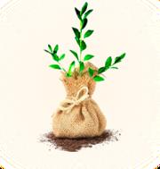 Реализация саженцев фруктовых деревьев