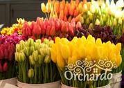 Продаю Тюльпаны на 8 Марта