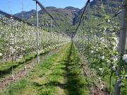 """Интенсивный сад """"под ключ"""",  комплектующие для садов и виноградников"""