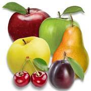 Саженцы яблони,  груши,  черешни,  сливы... Проекты садов и поддержка