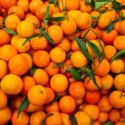 Свежие мандарины с  собственных садов Абхазии